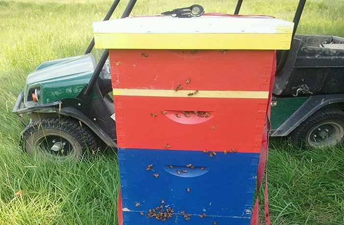 riverside golf course bee hive