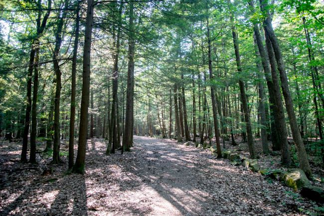 Baxter Woods in Deering Summertime (4)