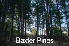 Baxter-Pines Opens in new window