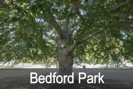 Bedford-Park Opens in new window