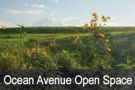 Ocean-Ave-Open-Space